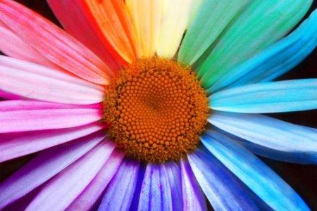 art_simona_fiore-colorato